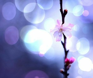 bokeh, photography, and flower image