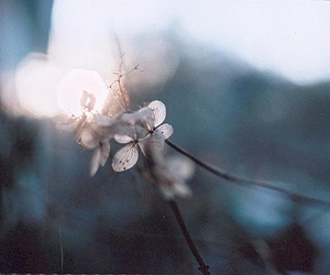 bokeh and flower image