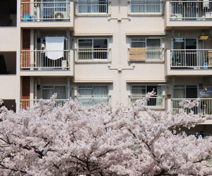 building, cherry blossoms, and japan image