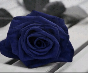 blue and rose image