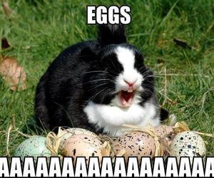 eggs, rabbit, and bunny image