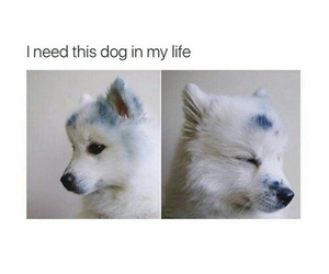 adorable, i need this, and cute image