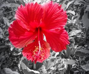 black, color splash, and flora image