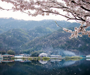 spring, nature, and sakura image