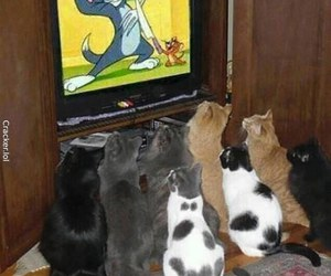 cartoons, cat, and cats image
