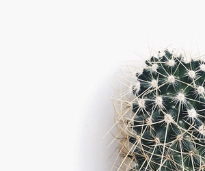 cactus, clean, and feed image