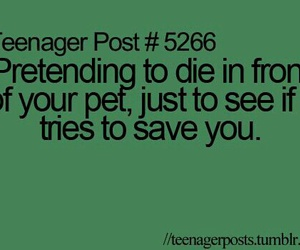 teenager post, funny, and pet image