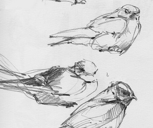 sketch, bird, and drawing image