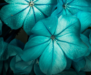 flowers and turquoise image