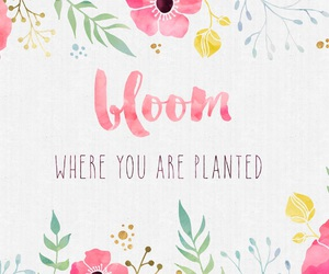 bloom, background, and wallpaper image