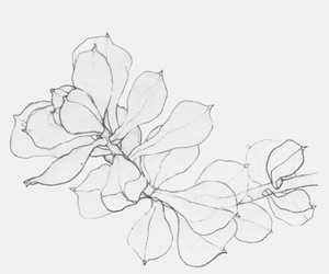 art, line, and simple image
