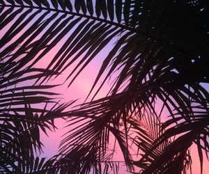 pink, summer, and sunset image