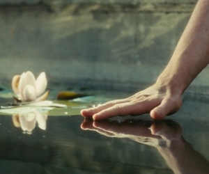 atonement, film, and lily pad image