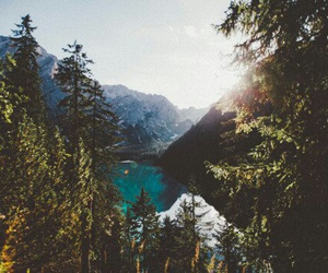 mountains, beautiful, and forest image