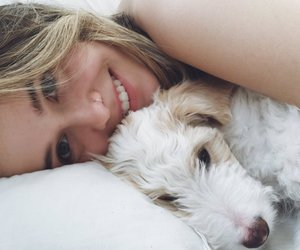 acacia brinley, dog, and acacia image