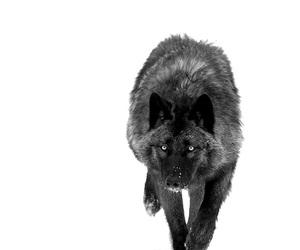 animal, black, and nature image