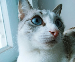 blue, my, and cat image