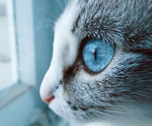 blue, cat, and cold image