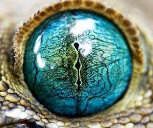 eye and blue image