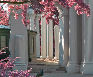 flowers, architecture, and pink image