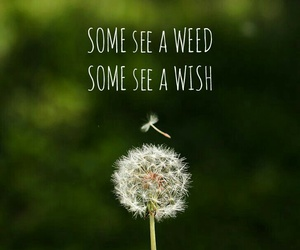 wish, quotes, and spring image
