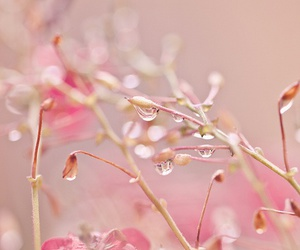 beautiful, flowers, and spring image