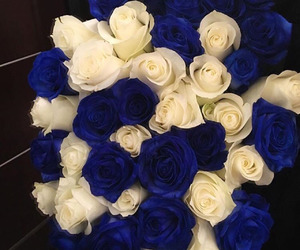roses, flowers, and blue image