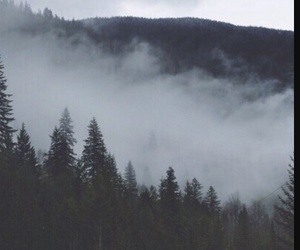 fog, forest, and sky image