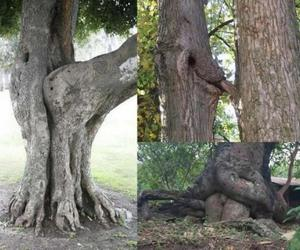 nature, trees, and sex image