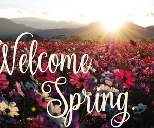 flowers and welcome spring image