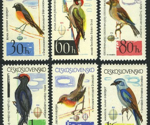 aves, bird, and collection image