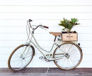 bike, bicycle, and plants image