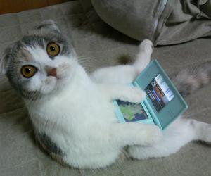 cat, ds, and game image