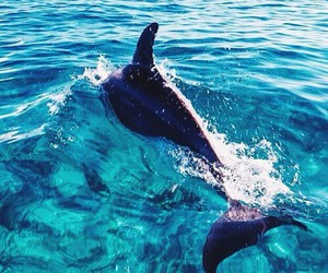 dolphin, summer, and animal image