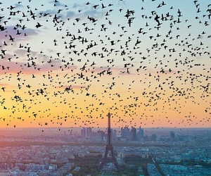 paris, bird, and france image