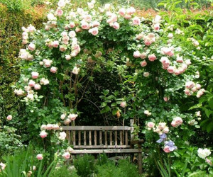 garden and roses image