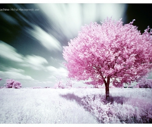 pink, tree, and vyer image