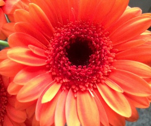 excited, flower, and orange image