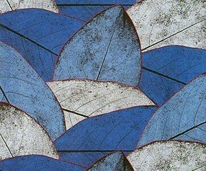 blue and leaves image