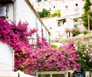 flowers, italy, and cafe image
