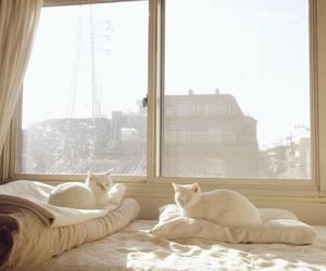 aesthetic, cats, and animals image