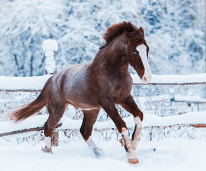 horse, winter, and photography image