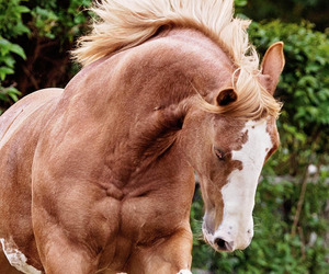 beauty, horse, and photography image
