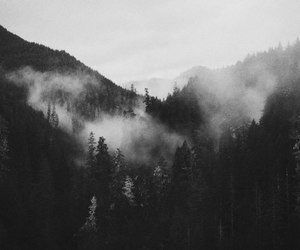dark, black, and forest image