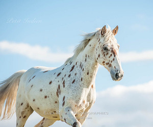 horse, photography, and winter image