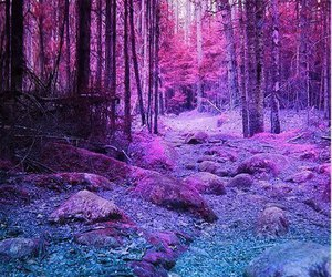 forest, purple, and nature image