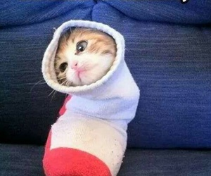 funny, kittens, and cute image