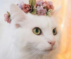 she's so pretty and hani image
