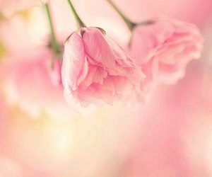 flowers, pastel, and pastels image