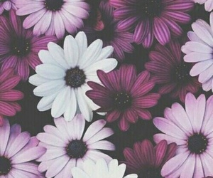 flowers, wallpaper, and fuchsia image